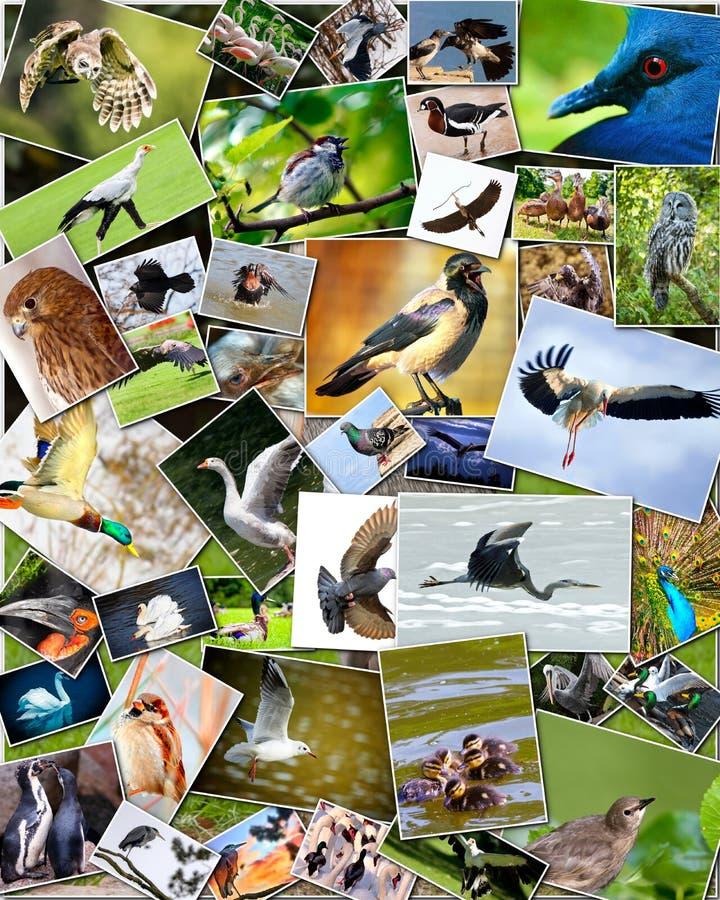 Collage van vogels stock fotografie