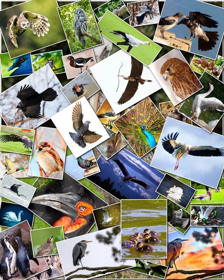 Collage van vogels royalty-vrije stock fotografie