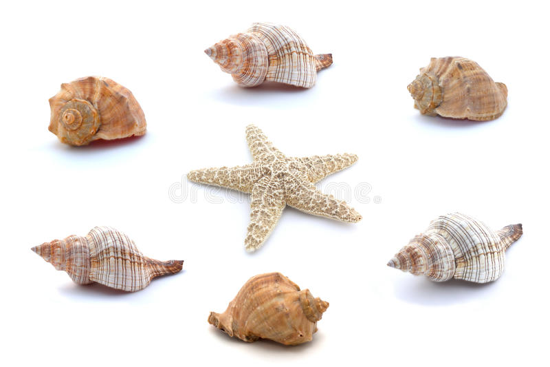Collage van zeeschelpen en zeester op witte achtergrond worden geïsoleerd die royalty-vrije stock afbeelding