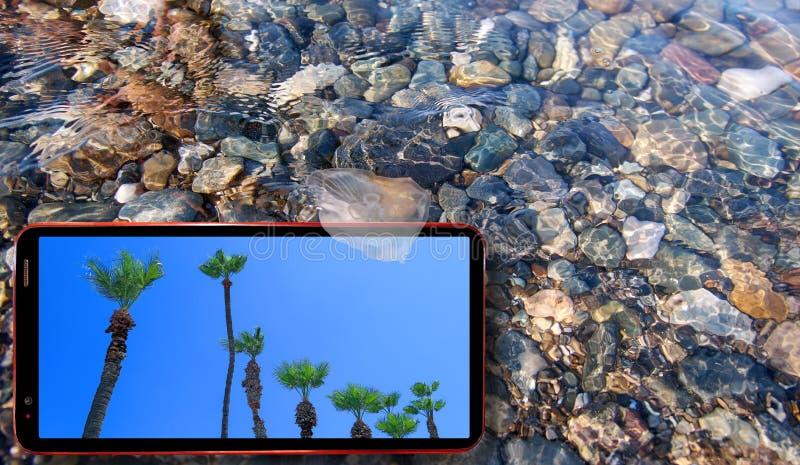 Collage van zonnige kwallen in water boven de stenen van de Zwarte Zee drijven en celtelefoon die zonnige groene palmen tonen royalty-vrije stock foto