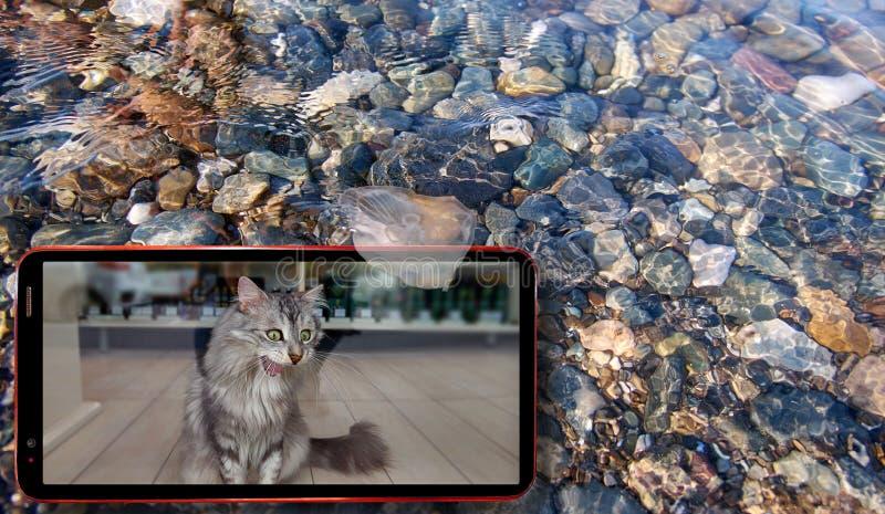 Collage van zonnige kwallen in water boven de stenen van de Zwarte Zee drijven en celtelefoon die kat op het scherm tonen stock foto