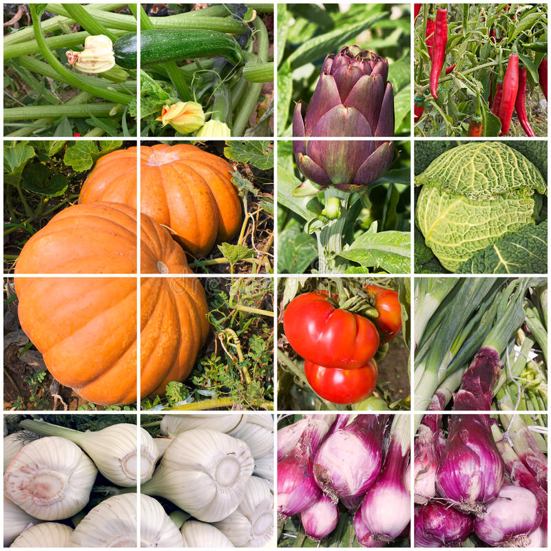 Collage of vegetables royalty free stock photos