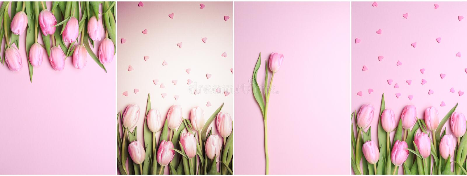 Collage of vertical pink tulips photos on the pink background. F. Lat lay, top view. Valentines, spring and mother`s day background royalty free stock photo