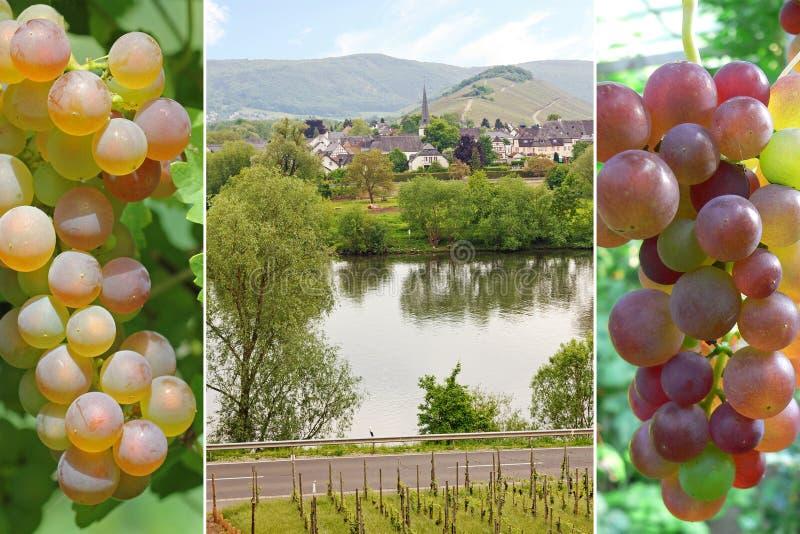 Collage - viñedo y uvas imagenes de archivo