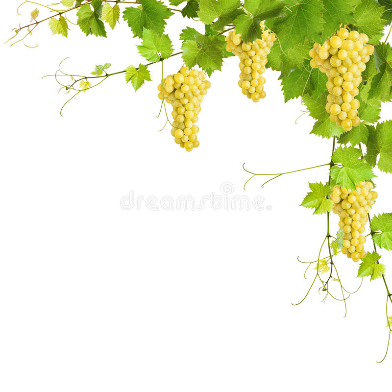Download Collage Of Vine Leaves And Yellow Grapes Stock Photo - Image: 36792230