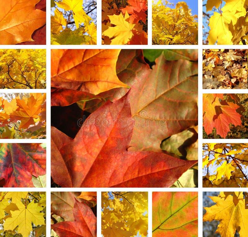 Collage vom sch?nen Herbstlaub des Ahorns lizenzfreie stockfotos