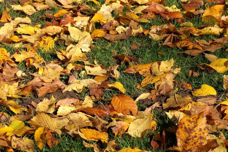 Collage von gefallenen Blättern lizenzfreies stockfoto