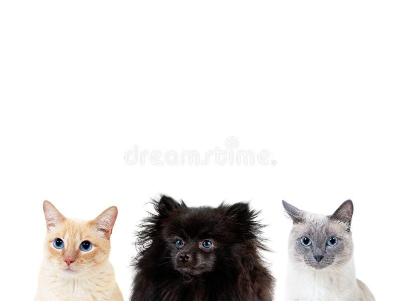 Collage von Haustieren mit Kopienraum über Köpfen lizenzfreies stockbild