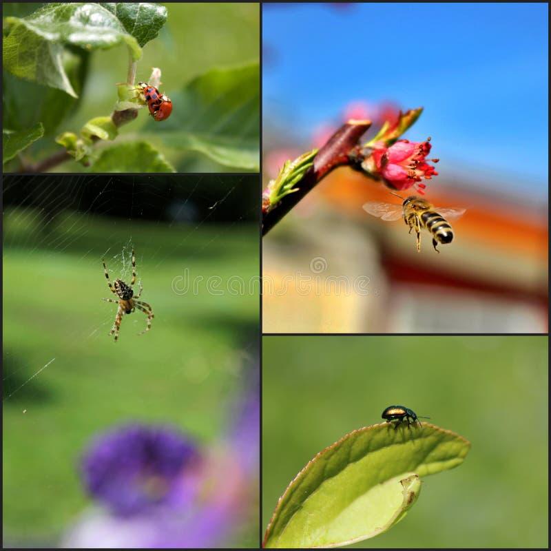 Collage von Insekten lizenzfreies stockbild