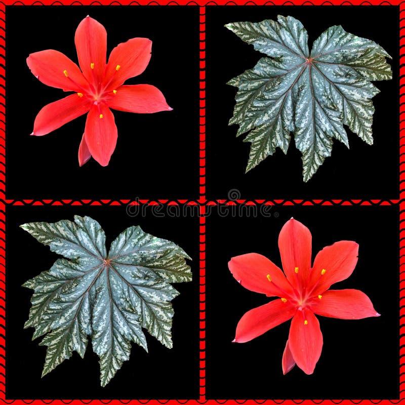 Collage von roten Weihnachtslilien- und -begonienblättern stockbilder