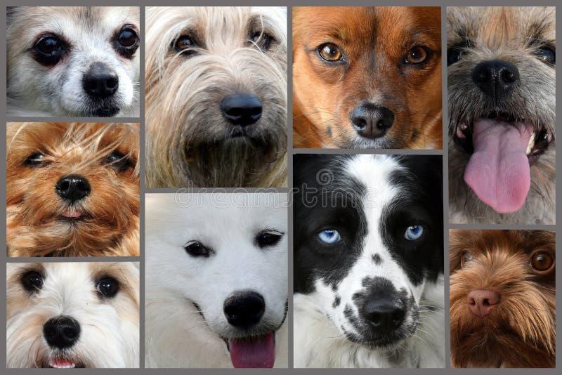 Collage von verschiedenen Hundegesichtern stockbilder