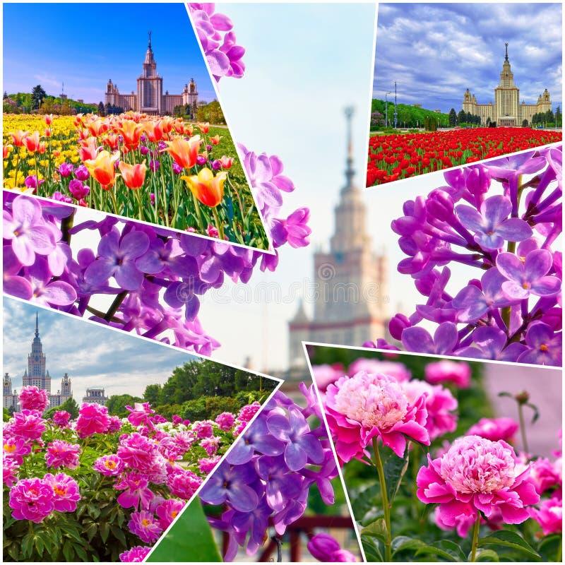 Collage von vibrierenden Ansichten der ber?hmten russischen Universit?t stockfoto