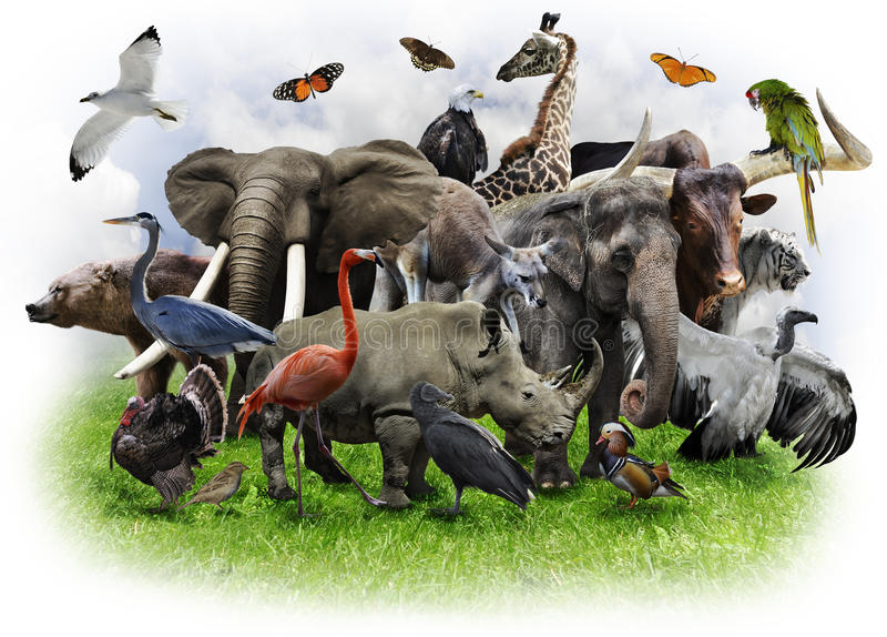 Animals Collage stock images