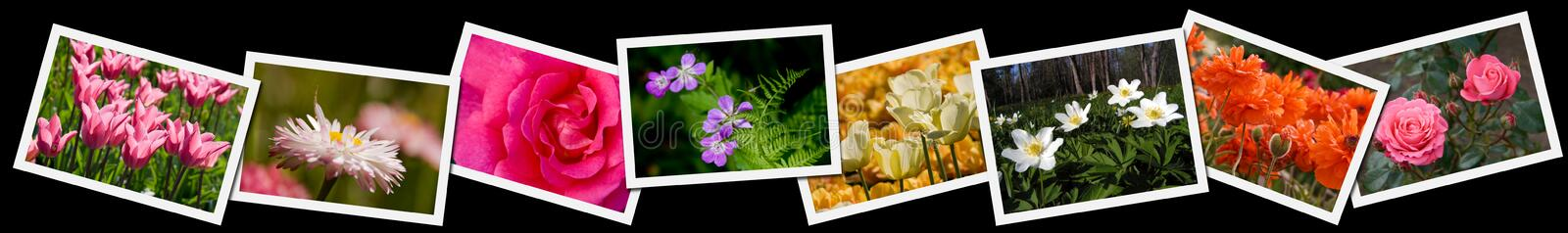collageblommafotografier stock illustrationer