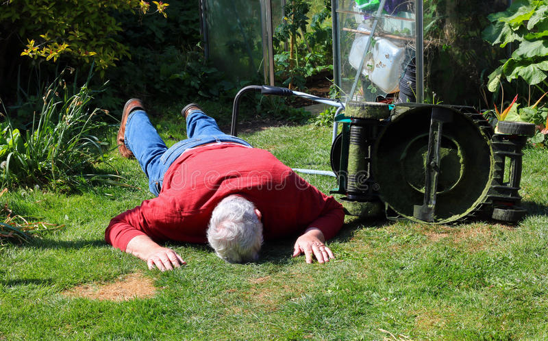 Collapsed or dead or injured senior man. A senior man lying on the ground unconscious. The man is either dead or injured and is collapsed on the lawn near a stock images