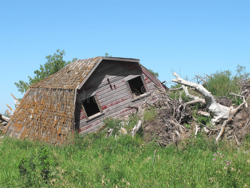 Collapsed wooden farm barn isolated. Remains of a collapsed old wooden farm barn by a brush pile with dead trees and wild grass. Against a blue sky royalty free stock image