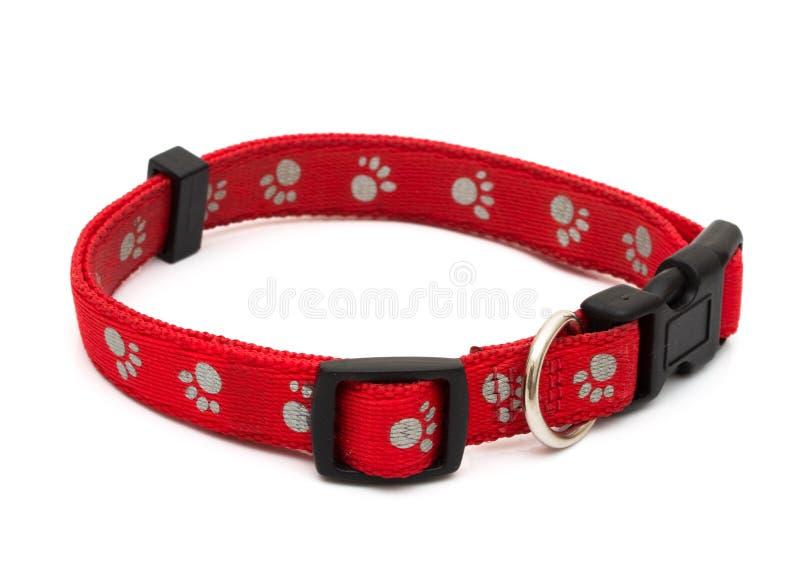 Collar de perro imagen de archivo