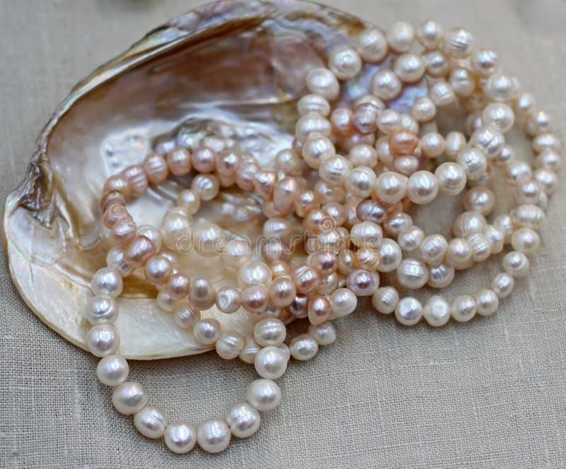 Collar nacarado con la ostra original para la venta por el jewele fotografía de archivo libre de regalías