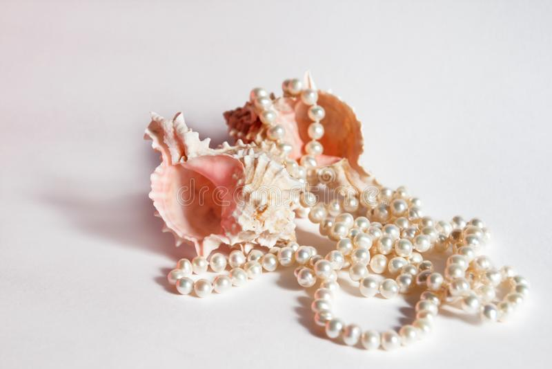 Collar y conchas marinas de la perla foto de archivo libre de regalías