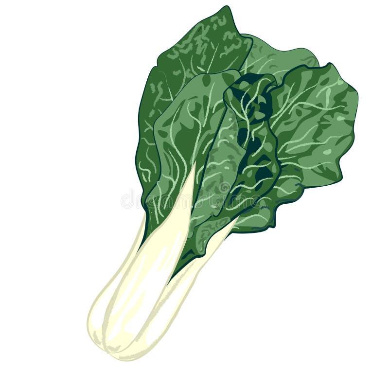 collard świeża zieleni fotografia ilustracja wektor