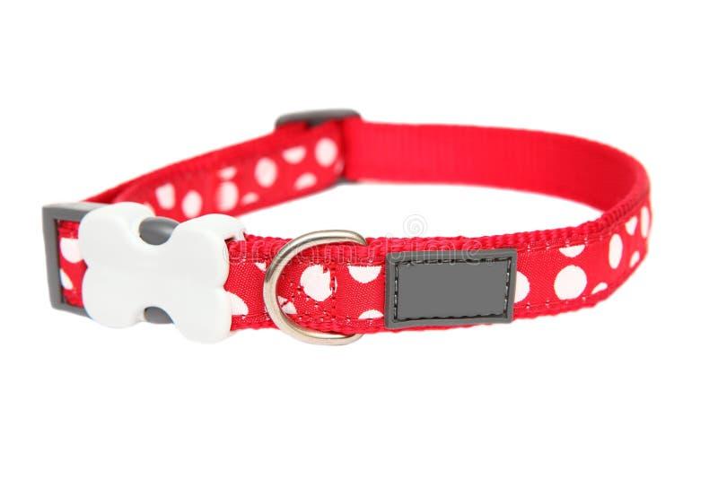 Collare di cane rosso fotografie stock