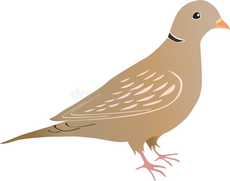 Collared Dove иллюстрация вектора