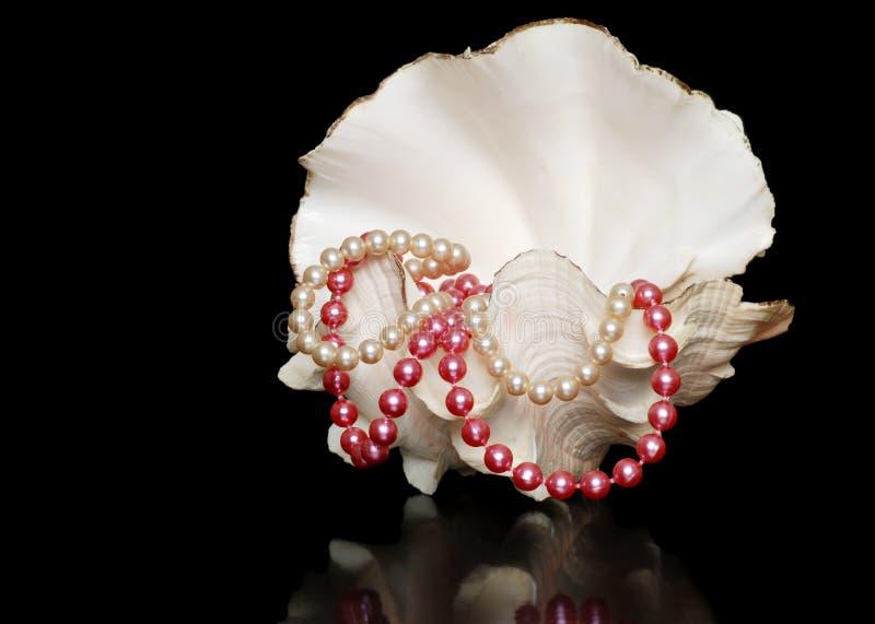 Collares de la perla en un shell del mar abierto foto de archivo libre de regalías