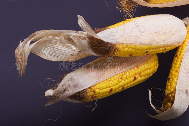 Collecte d'automne - maïs photographie stock libre de droits
