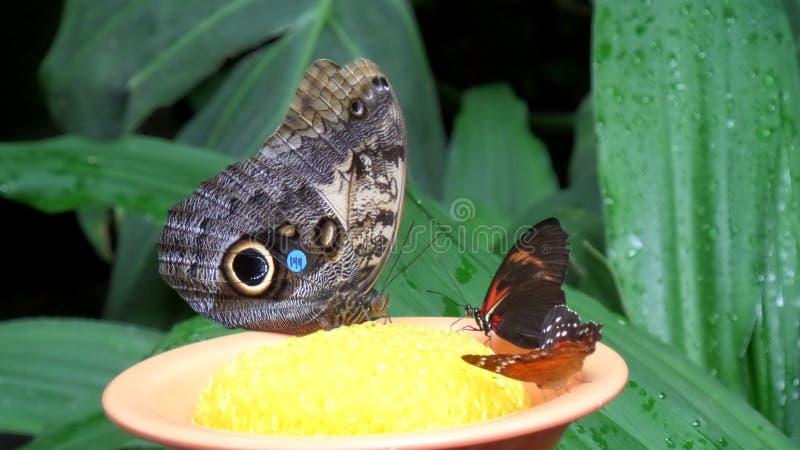 Collecte de papillons photographie stock