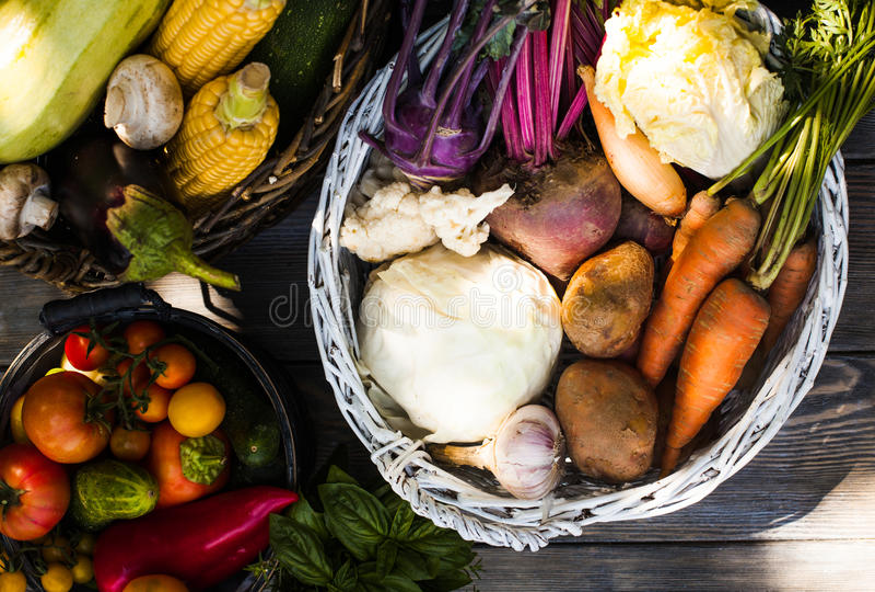 Collecte des légumes photographie stock libre de droits