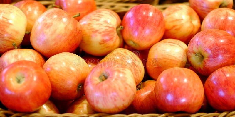 Collecte des pommes Beaucoup de pommes mûres typiques dans une boîte en plastique photographie stock