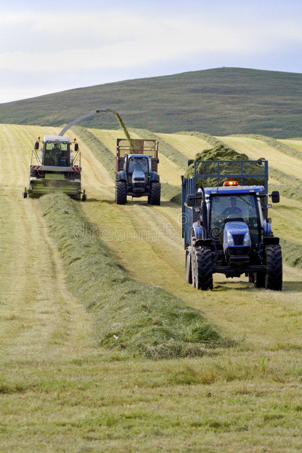 Collecting the Silage stock photo