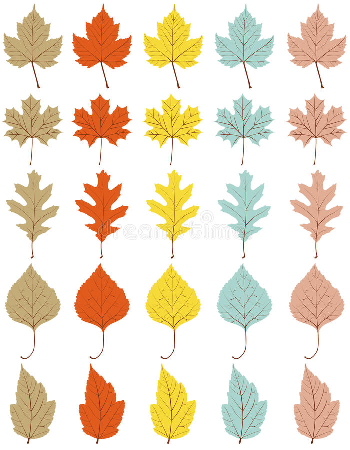 Download Collection Of 25 Different Autumn Leaves Stock Vector - Illustration of leaf, fresh: 21202506