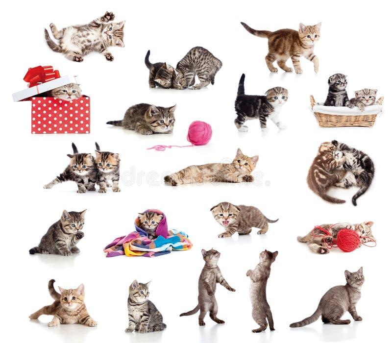 Collection active de chatons d'isolement sur le blanc photographie stock libre de droits