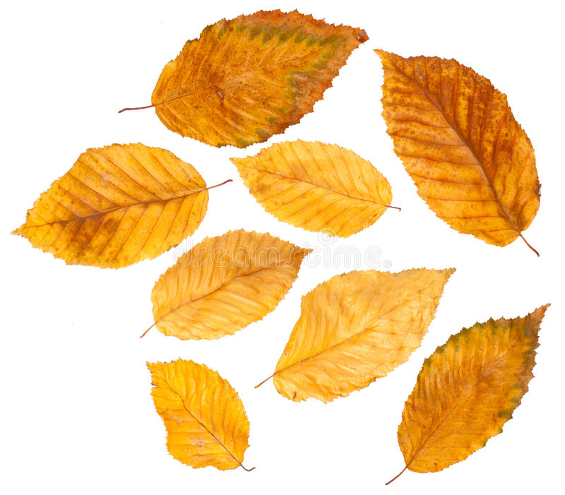 Collection autumn leaves stock photo