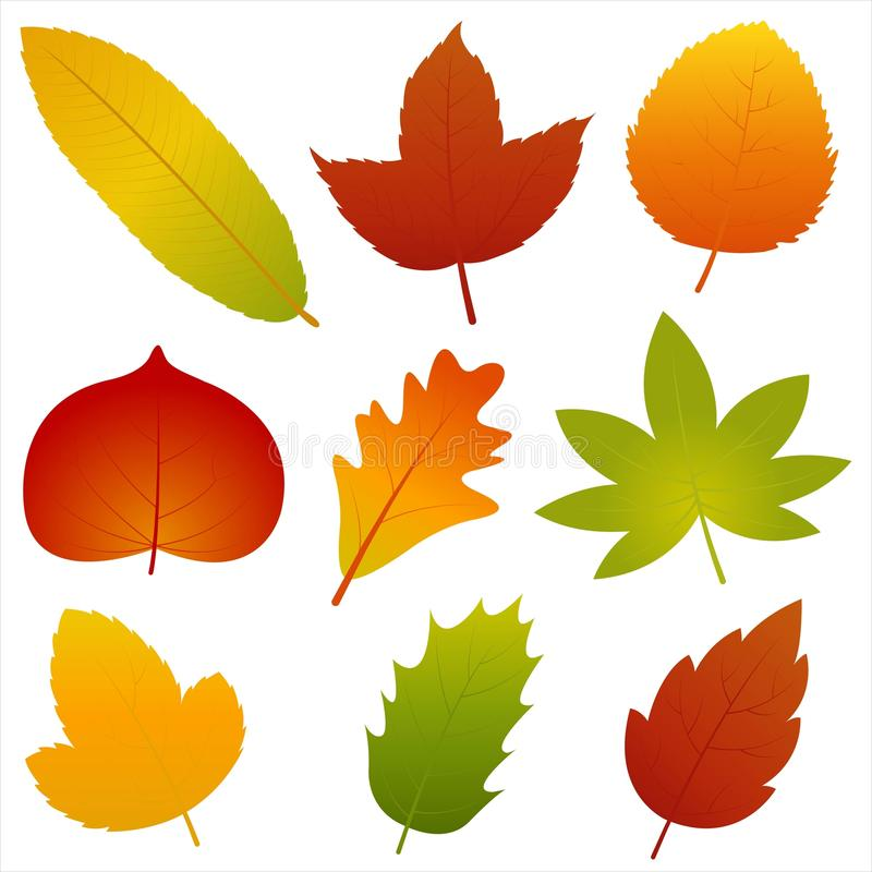 Collection of Autumn Leaves Vector stock illustration