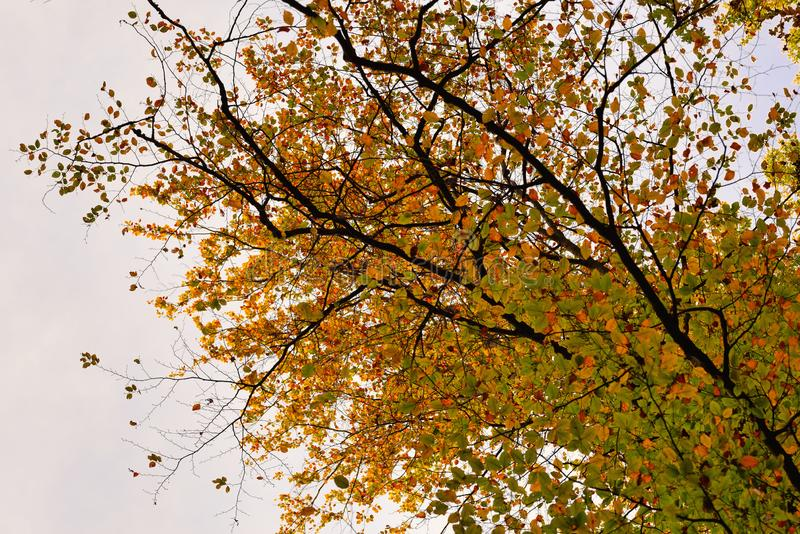 Autumn leaves of different colors on tree branches. Collection of Beautiful Colorful Autumn Leaves / green, yellow, orange, red stock photos