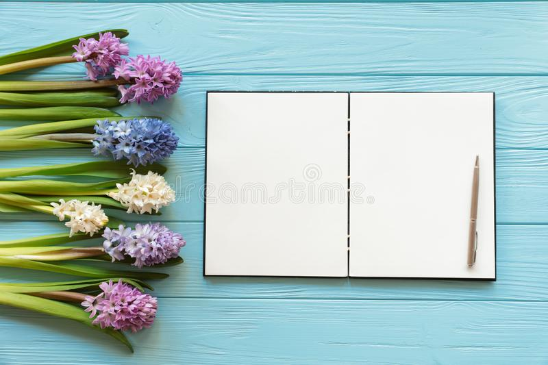 Collection of beautiful hyacinth flowers in pink, blue, white, violet colors and open notebook with pen on the blue wooden stock photos