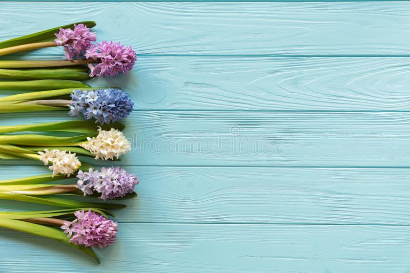 Collection of beautiful hyacinth flowers in pink, blue, white, violet colors on the blue wooden background with copy space stock photos