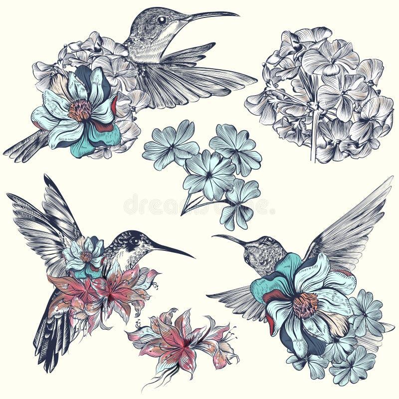 Beautiful vector hummingbirds with flowers vector illustration