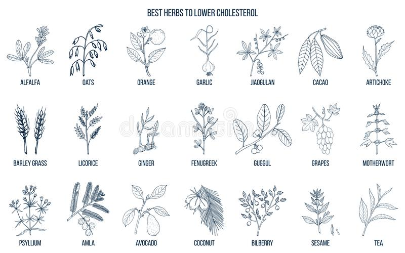 Collection of best herbs for lower cholesterol stock illustration
