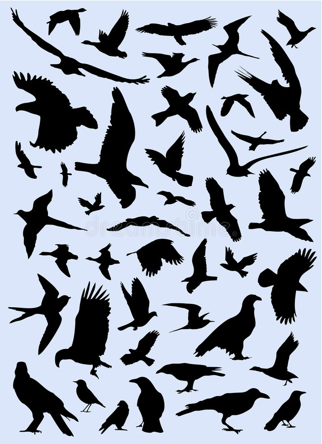 Collection of birds vector vector illustration