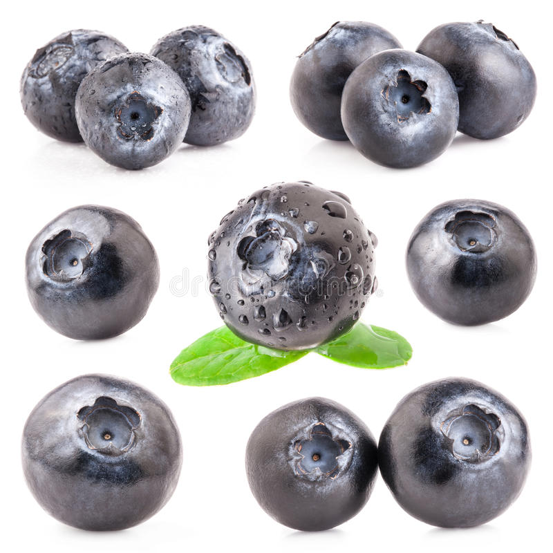 Collection of Blueberries royalty free stock image