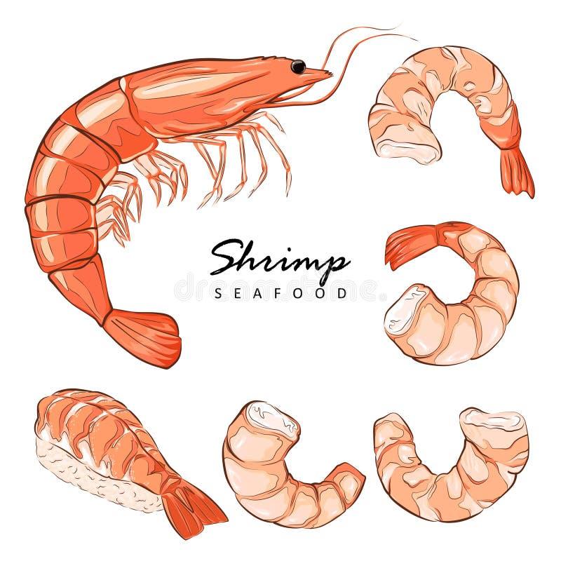 Collection boiled shrimp, shrimps without shell, shrimp meat. Shrimp prawn icons set. Boiled Shrimp drawing on a white background. Prawn icons set. Boiled Shrimp stock illustration