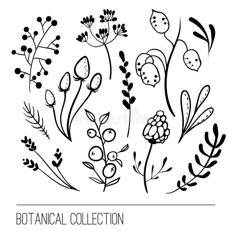 Collection botanique Conception graphique simple de fleur illustration libre de droits