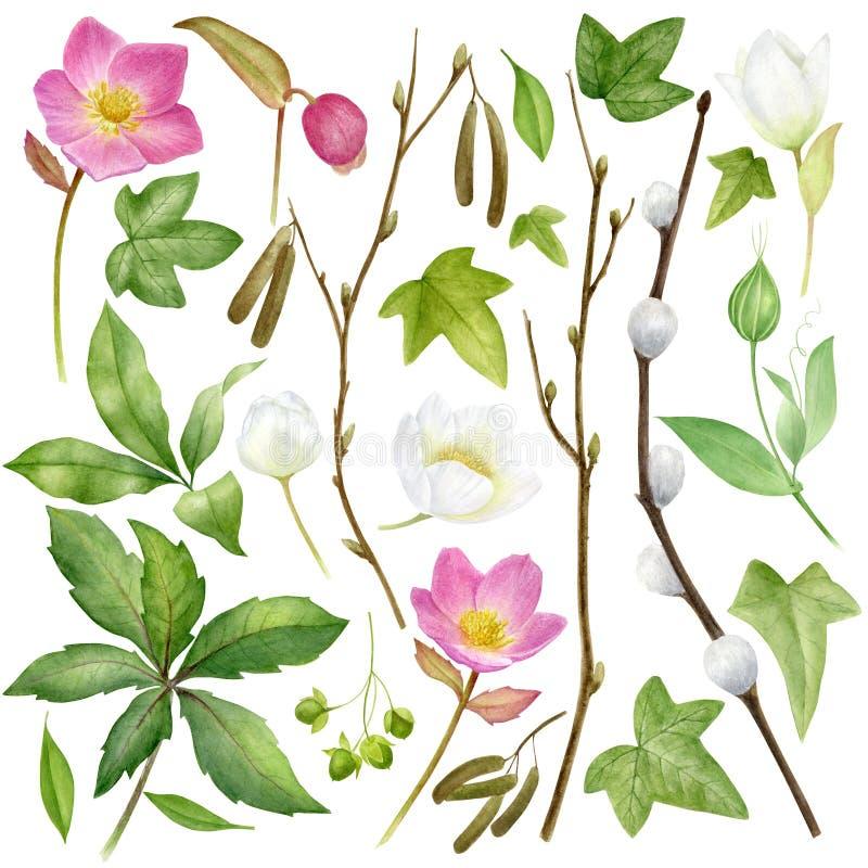 Collection botanique d'aquarelle Herbes, fleurs sauvages et feuilles Positionnement de nature illustration de vecteur