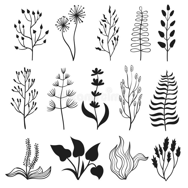 Collection of branches, leaves, herbs and flowers. Vector floral set. Collection of branches, leaves, herbs and flowers. Black plant silhouettes isolated on royalty free illustration
