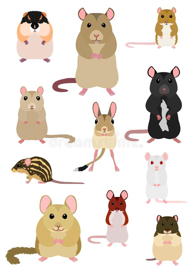Collection of Various breeds of mice and rats. Collection of breeds of mice and rats on white backgrounds vector illustration