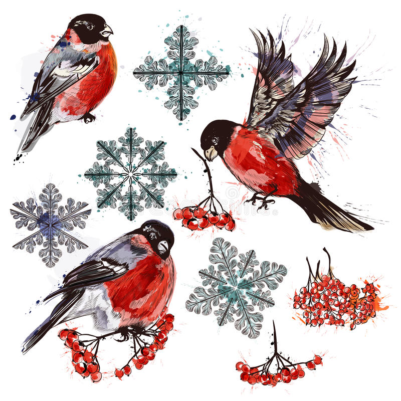 Collection of bullfinch birds, snowflakes and rowan. Christmas collection of bullfinch birds, snowflakes and rowan in watercolor style stock illustration