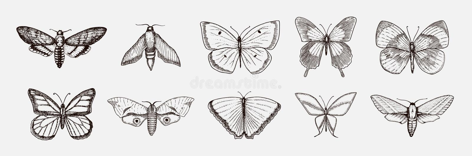 Collection of butterfly or wild moths insects. Mystical symbol or entomological of freedom. Engraved hand drawn vintage vector illustration